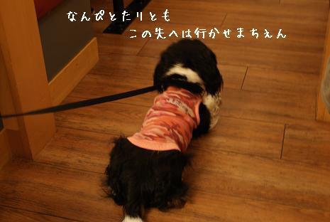 あくちゃん.JPG